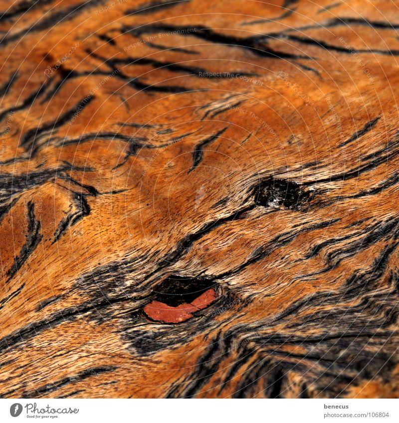 Schiffsplanke Holz Holzmehl Strukturen & Formen Muster braun flach Schiffsplanken alt Überzug Astloch Totholz Tigerfellmuster Handwerk Maserung Holzbild