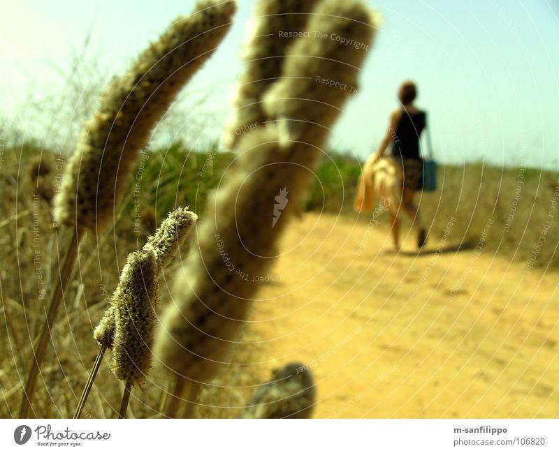 Ein Andalusischer Spaziergang Frau Natur Pflanze Sommer Freude Ferien & Urlaub & Reisen Tier gelb Wege & Pfade Sand Feld wandern Wetter Sträucher Boden