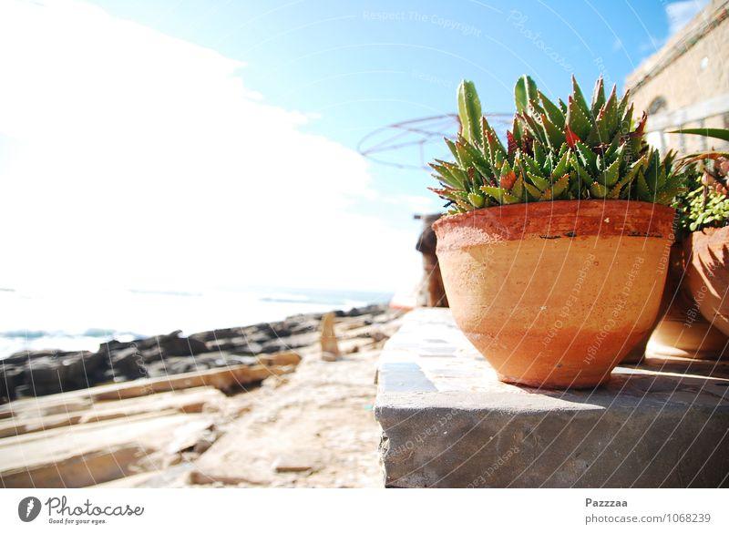 Zimmerpflanze im Urlaub Pflanze Garten Stein hell Sommerurlaub Marokko Aloe