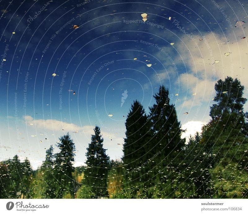 Herbstlaub an den Bäumen Baum Spiegel See Teich Wald grün Blatt Wolken weiß blau Reflexion & Spiegelung entgegengesetzt Im Wasser treiben ruhig genießen Himmel