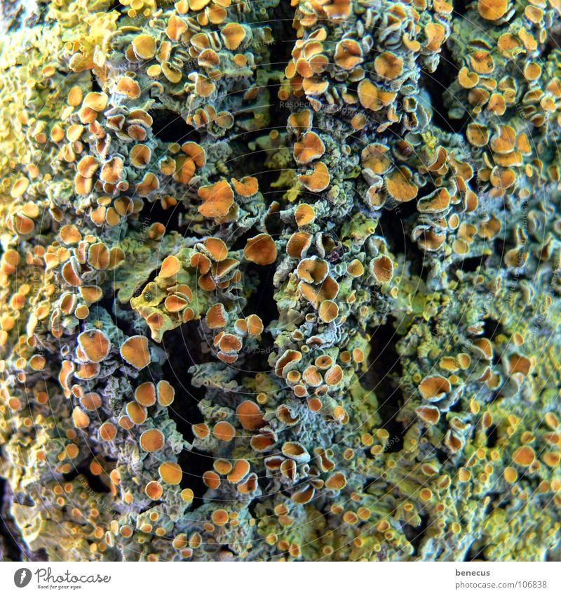 Korallenriff ? Baum Pflanze Leben orange offen Loch Pilz Botanik Öffnung pflanzlich Riff binden Sporen netzartig Samen