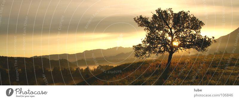 Morgenrot Baum Sonne Stimmung Wetter Trauer Verzweiflung Panorama (Bildformat) Morgendämmerung aufwachen aufstehen Sonnenlicht Lichtstimmung