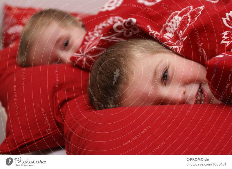 Zwei Jungs eingekuschelt im Bett Mensch maskulin Kind Kleinkind Junge Bruder Familie & Verwandtschaft Freundschaft Kindheit 2 1-3 Jahre 3-8 Jahre Bettwäsche