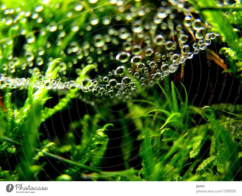 Tropfenhimmel Natur grün Herbst Gras Regen frisch Wassertropfen Seil Netz feucht Spinnennetz