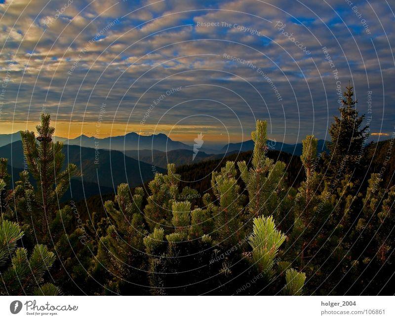Ausblick im Schwarzwald Natur Himmel Baum Wolken Berge u. Gebirge Landschaft Abenddämmerung Nadelbaum