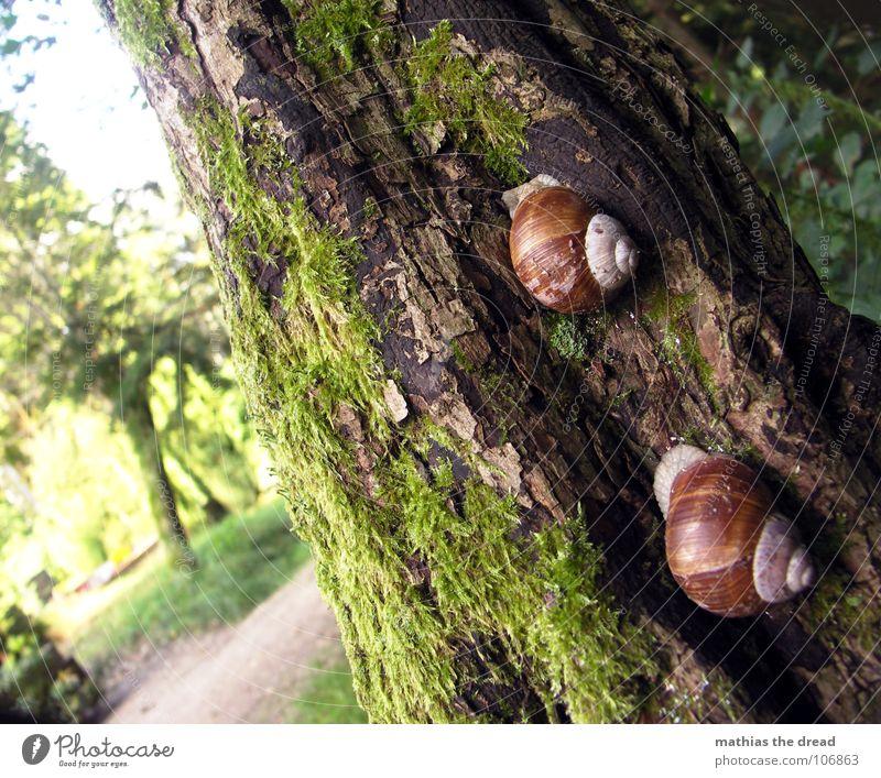 RACE Tier Schleim Haus Schneckenhaus Schleimspur Spuren krabbeln anbiedern Baum Baumrinde Sonnenlicht Unschärfe Insekt Baumstamm Natur Außenaufnahme Tag