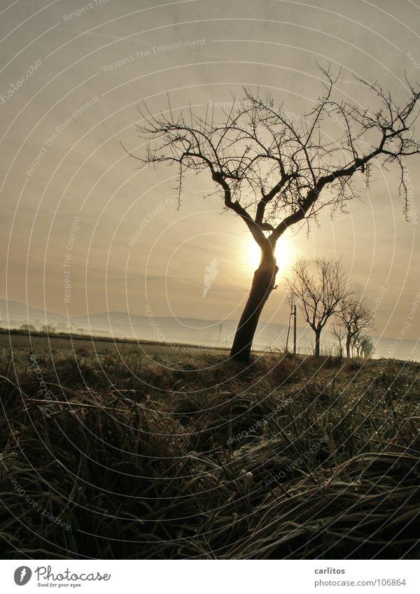 Sommer 2007 Apokalypse Baum Baumreihe Farblosigkeit Winter Sonnenaufgang Gegenlicht Wassergraben Wetter Endzeitstimmung geheimnisvoll verstecken Silhouette