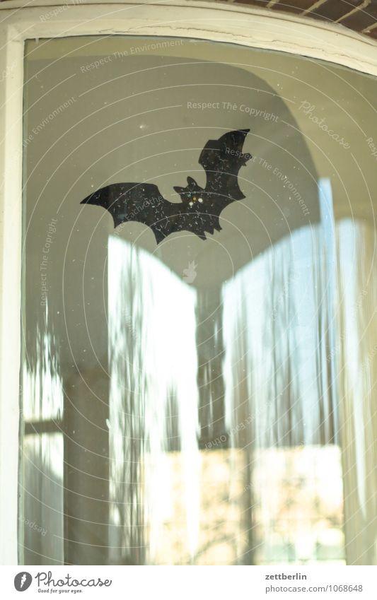 Fledermaus Fledermäuse Dracula Geister u. Gespenster dramatisch Dramatik sage gruselig Halloween Schrecken Karneval fliegen Flügel Glas Fenster Fensterscheibe