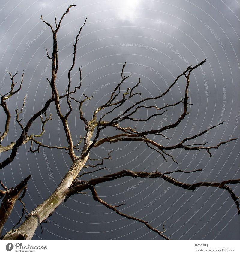 Herbst Baum Dürre trocken laublos Holz Totholz Waldsterben Tod Vergänglichkeit grau Wolken dunkel verzweigt emporragend Apokalypse Trauer Verzweiflung