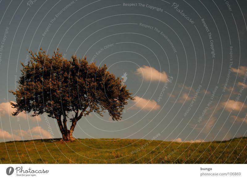 Nachdenken Baum Wolken schlechtes Wetter dunkel bedrohlich Dämmerung Nacht Horizont Sonnenuntergang träumen Traumwelt Einsamkeit harmonisch Farbenspiel Romantik