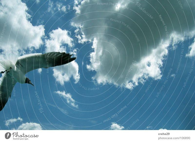 Flug Möwe Vogel Wolken Himmel Aussicht fliegen Blick clouds sky blau Kontrast Natur
