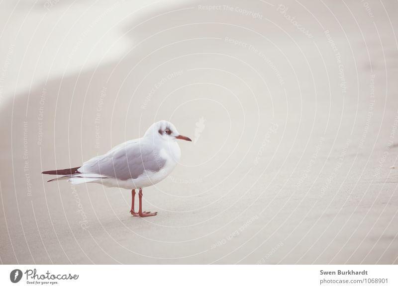 Niemand sagt dir was du tun sollst... Natur Wasser Sommer Meer Tier Strand Umwelt Herbst Küste Sand Vogel Wildtier Wellen stehen sitzen Flügel