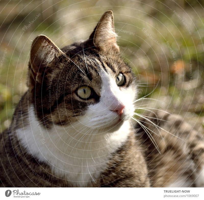 Missverständnis | Aber ich hab' doch keine Eier! Tier Haustier Katze 1 beobachten Denken sprechen glänzend hören Kommunizieren lernen Blick warten authentisch