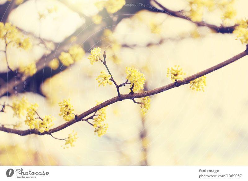 golden Umwelt Natur Sonne Frühling Sommer Schönes Wetter Baum Blüte schön Frühlingsgefühle gelb braun Gelbstich Lichtschein Lichtstrahl hell Fröhlichkeit Ast
