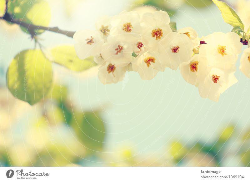Blütenpracht Umwelt Natur Pflanze Himmel Sonne Sonnenlicht Frühling Sommer Schönes Wetter Baum Blatt ästhetisch schön geblümt Frühlingsgefühle grün hell