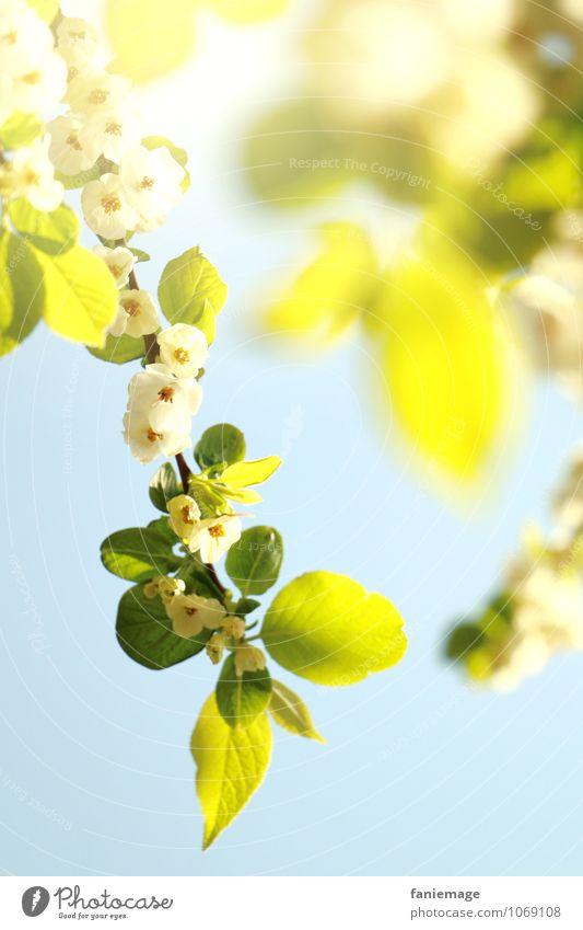 blossoms Umwelt Natur Sonne Frühling Sommer Schönes Wetter Baum Blüte ästhetisch schön Fröhlichkeit frisch hell gelb Kraft weiß hell-blau Frühlingsgefühle
