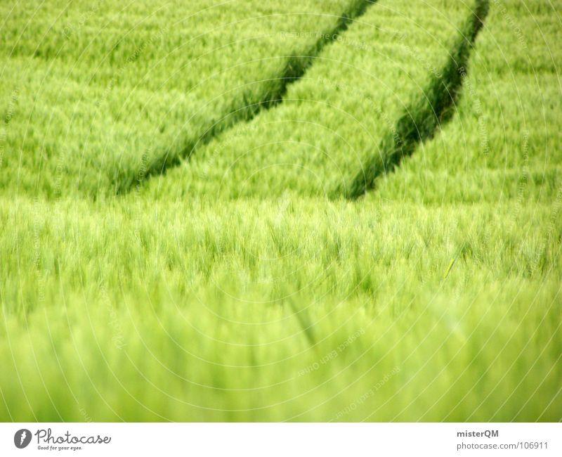 Brötchengeber Feld grün Ferne Einsamkeit ruhig Spuren dunkel Vordergrund Hintergrundbild Zutaten unreif Deutschland Gesundheit Heimat Gelassenheit