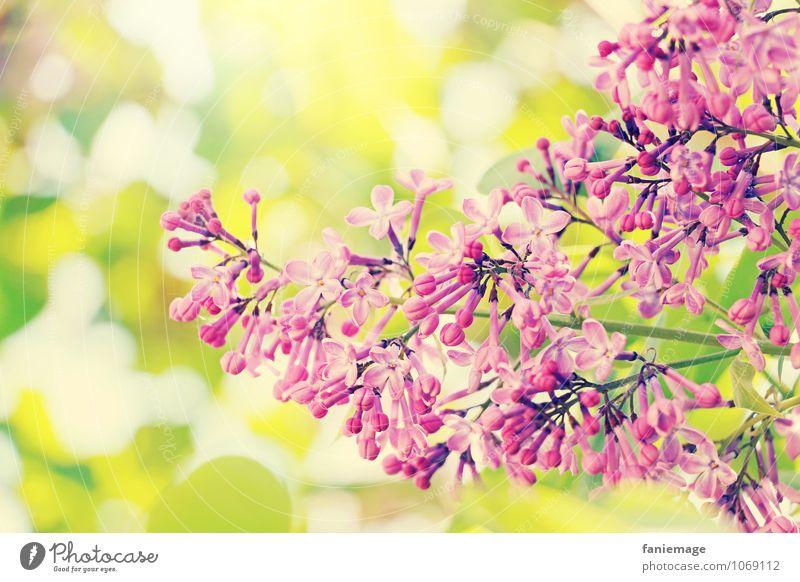 ornament Umwelt Natur Sonne Sonnenlicht Frühling Sommer Schönes Wetter Baum Blatt Blüte ästhetisch schön Frühlingsgefühle Blühend rechts geschwungen rosa