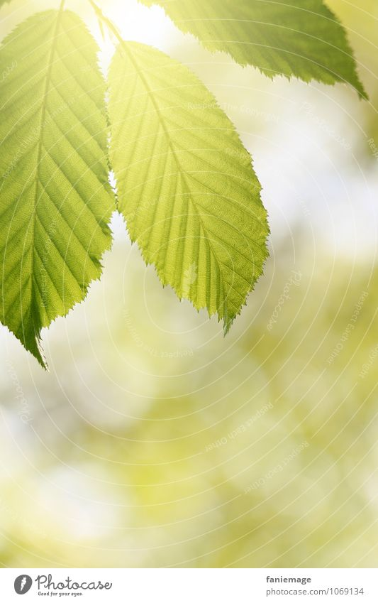 Chlorophyll Umwelt Natur Frühling Sommer Schönes Wetter Baum Blatt ästhetisch schön Sonne Lichteinfall Blätterdach Lichtpunkt grün hellgrün Frühlingsgefühle