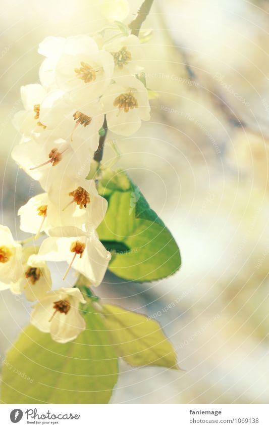Blütenzweig Umwelt Natur Sonne Sonnenlicht Frühling Sommer Schönes Wetter Baum ästhetisch schön diagonal Ast Zweige u. Äste Blütenblatt Blütenstauden weiß grün