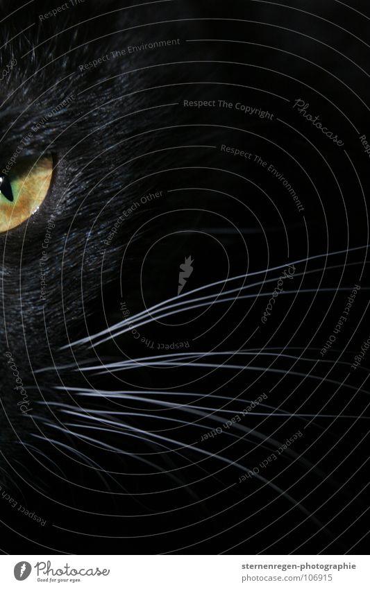 mrrr. Katze schwarz Leopard bedrohlich Angriff Tierporträt Säugetier schwarze katze grüne augen grünes auge Schwarzweißfoto Katzenauge Hauskatze Auge