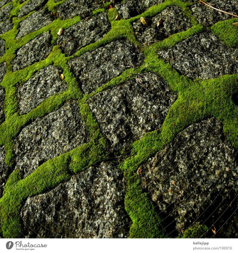 pixelgrün grün Straße grau Stein Wege & Pfade Wachstum Quadrat feucht Kopfsteinpflaster Moos Granit bewachsen Quader Reifezeit
