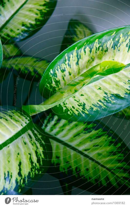 plant2 Pflanze Blume Blatt Grünpflanze Topfpflanze mehrfarbig grün Schutz Geborgenheit Begierde Farbfoto Gedeckte Farben Innenaufnahme Morgendämmerung