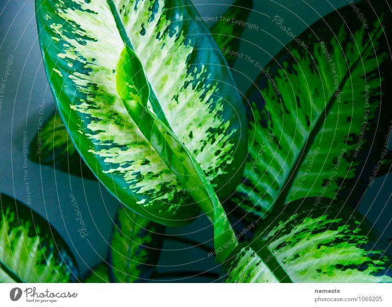 plant blau Pflanze grün Blatt Glück Grünpflanze