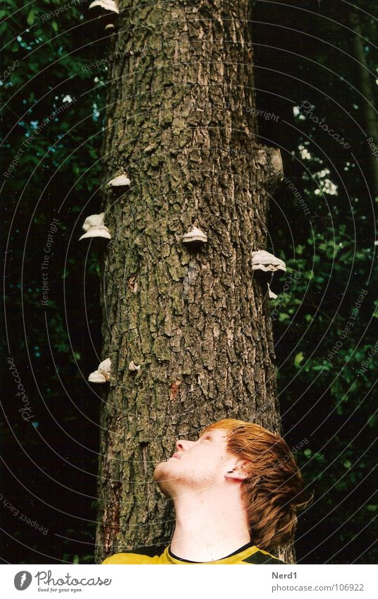 Baumpilze Mann Natur grün Wald Kopf beobachten Neugier Baumstamm 18-30 Jahre Pilz Baumrinde Junger Mann Männergesicht Männerkopf