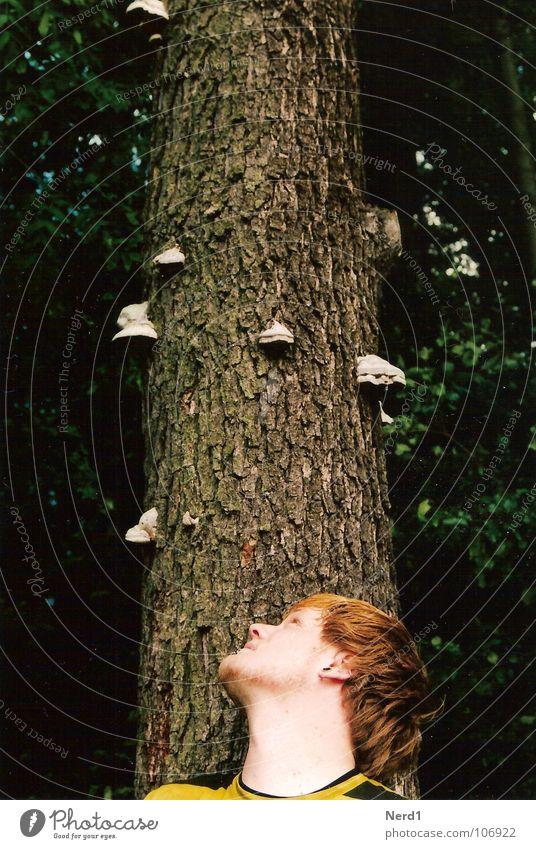 Baumpilze Mann Neugier Wald Baumrinde grün Natur Kopf Pilz Junger Mann 18-30 Jahre Wegsehen beobachten Blick nach oben Baumstamm Porträt Profil