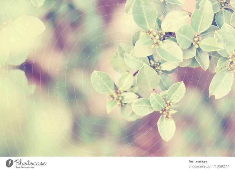 feine Blätter Natur schön grün Farbe Sommer Baum Blatt Umwelt Wärme Frühling rosa frisch Ast einfach Schönes Wetter violett