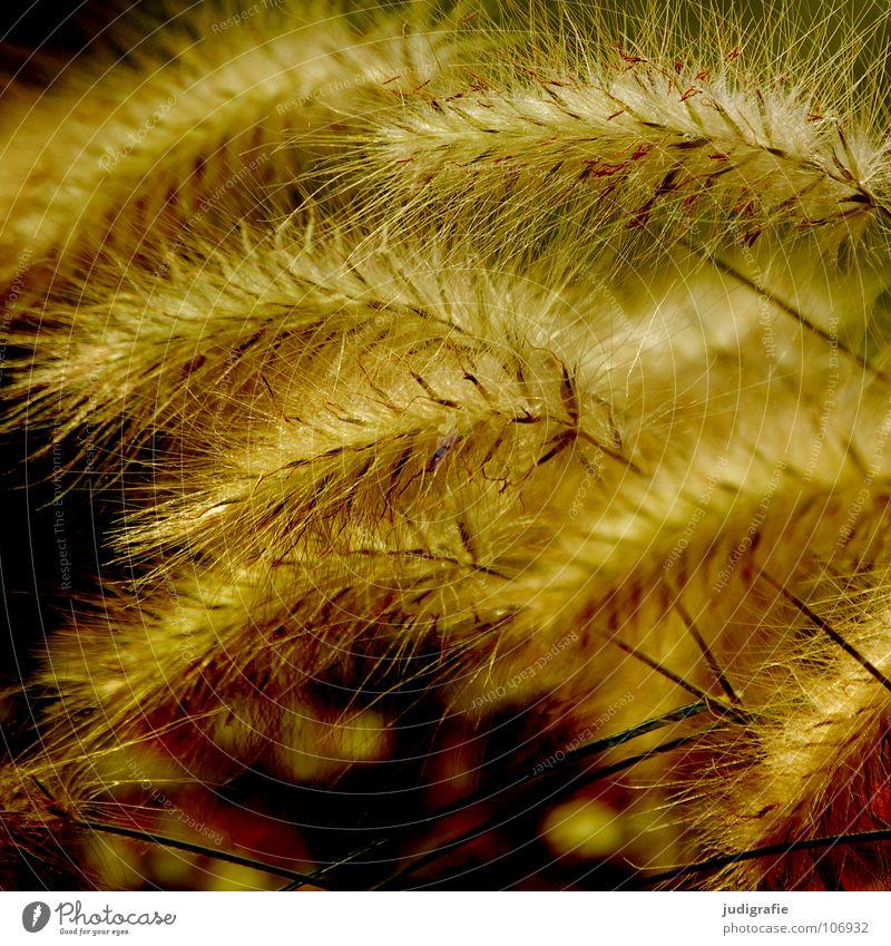 Gras grün schön Pflanze Farbe gelb Wiese glänzend weich zart Weide Stengel Halm sanft beweglich Pollen