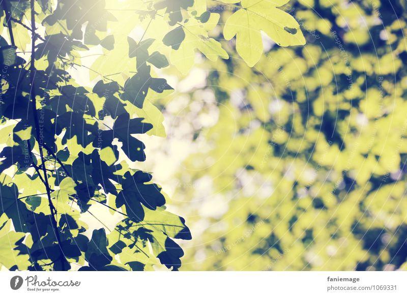 sonnendurchflutet Natur schön grün weiß Sommer Sonne Baum Erholung Blatt Umwelt Wärme Frühling hell leuchten Fröhlichkeit genießen