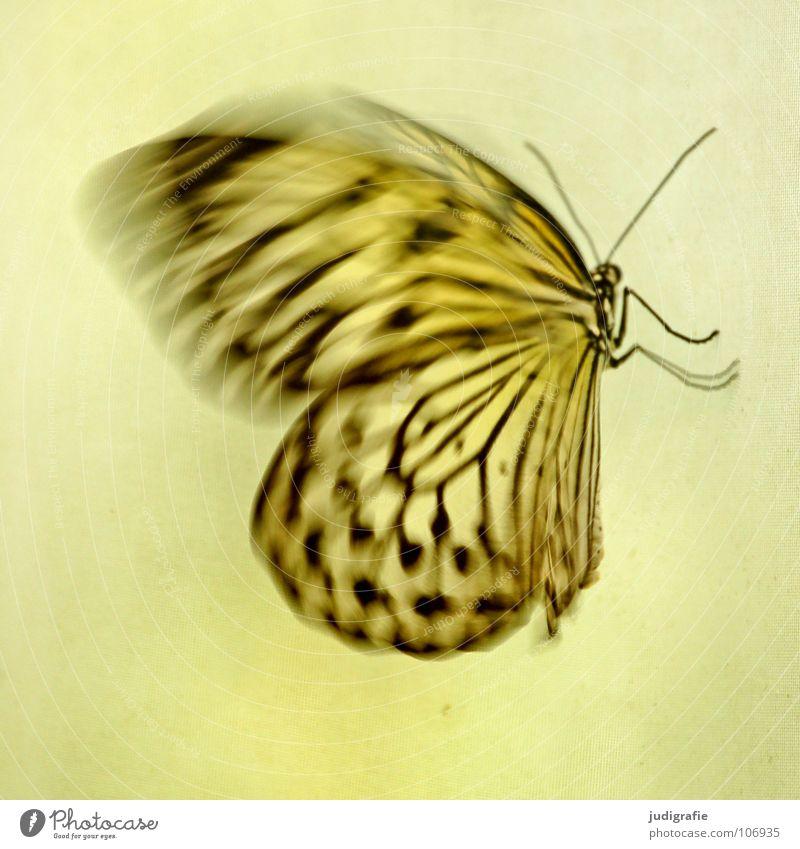 Schmetterling Muster Insekt Fühler flattern schön Tier Farbe Flügel Bewegung Dynamik Strukturen & Formen fliegen Beine Natur