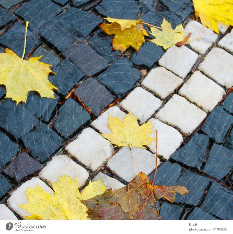 BLATT AUF QUADRAT Winter Blatt Ferne Herbst kalt Schnee Wege & Pfade Stein braun Eis Frost Bürgersteig Stengel Quadrat Verkehrswege Kopfsteinpflaster