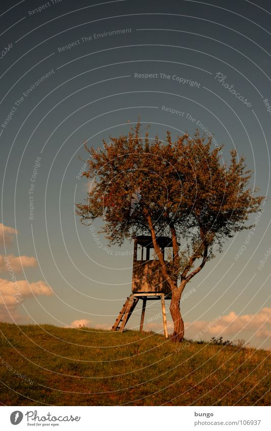 Zeit haben Natur Himmel Baum ruhig Wolken Einsamkeit Leben dunkel Erholung Herbst träumen Landschaft orange Horizont Romantik Frieden