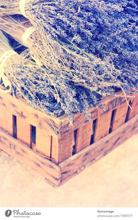 l'été provençal Natur Sommer Schönes Wetter Blüte schön Lavendel Lavendelernte Frankreich Les-Baux-de-Provence sommerlich Duft Korb Warmes Licht Warme Farbe