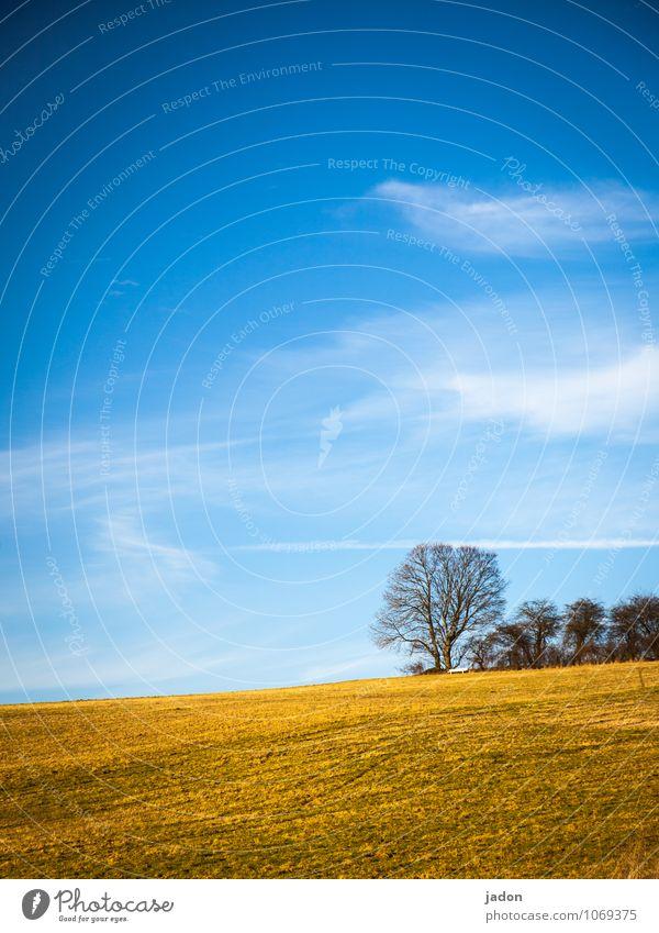 frühlingsanfang. Himmel Natur Pflanze schön Baum Landschaft Wolken Ferne Umwelt Wiese Gras Frühling Horizont Feld Idylle Erde