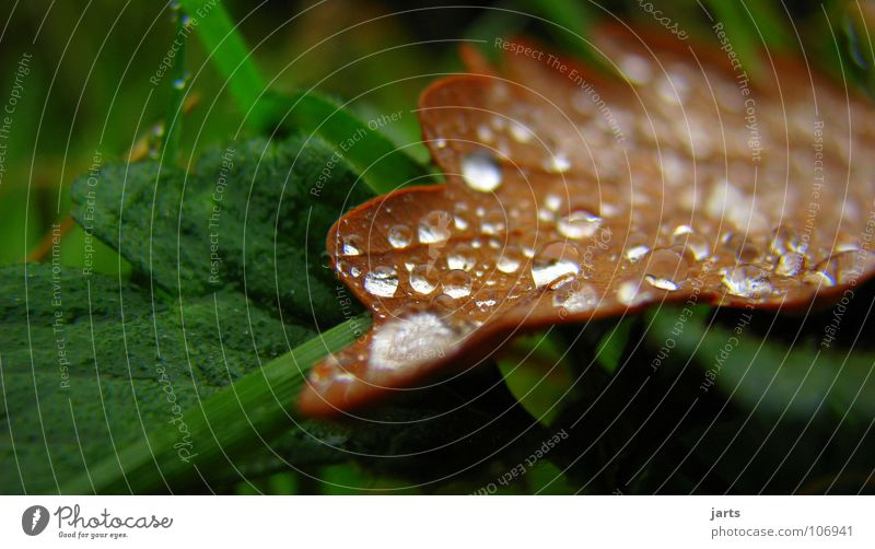Autumn Herbst Blatt Wassertropfen Regen feucht nass Makroaufnahme Nahaufnahme Seil jarts