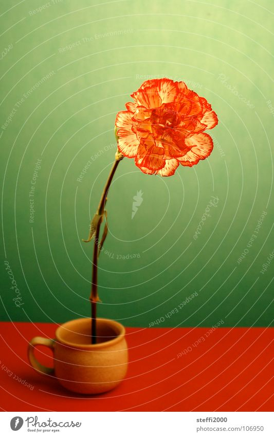 Blume Blume grün rot frisch Vergänglichkeit zart stark Tasse skurril zerbrechlich gestellt unnatürlich Nelkengewächse