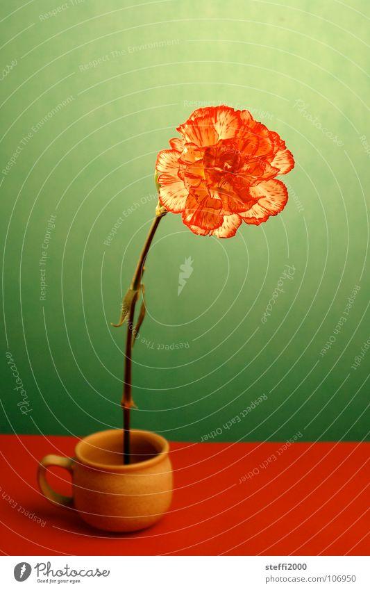 Blume Tasse rot grün zart zerbrechlich Vergänglichkeit stark frisch skurril unnatürlich Innenaufnahme Kontrast gestellt abstrakt vor grünem Hintergrund