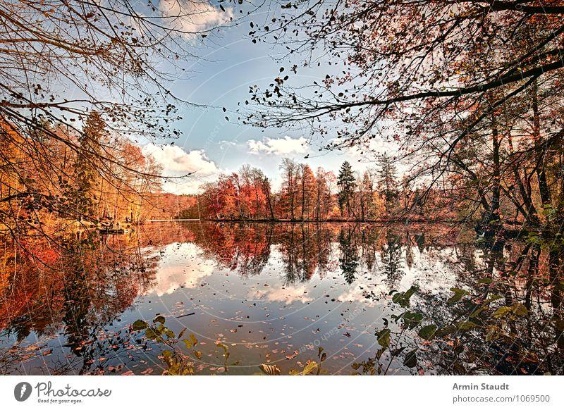 Herbstwald mit spiegelglattem See Himmel Natur schön Farbe Erholung Landschaft Blatt ruhig Wald Leben natürlich Denken Horizont Park