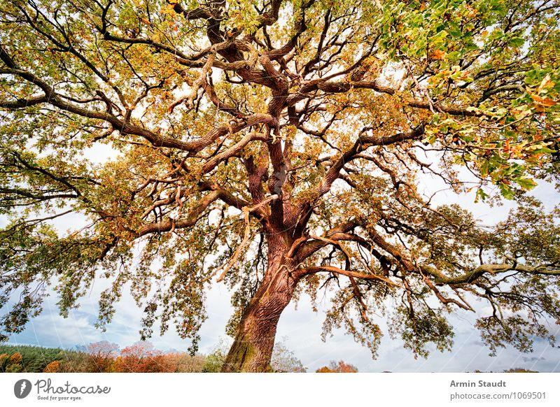 Herbstbaum Himmel Natur Pflanze schön grün Sommer Baum Landschaft Wald gelb natürlich außergewöhnlich Stimmung Feld Wachstum