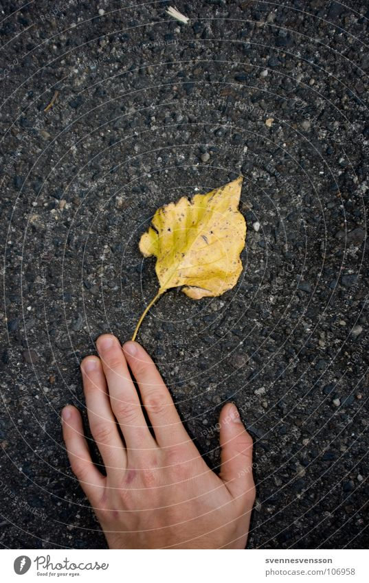 Der Herbst, zum Greifen nahe. Hand Pflanze Blatt Haut Beton Finger Asphalt fangen