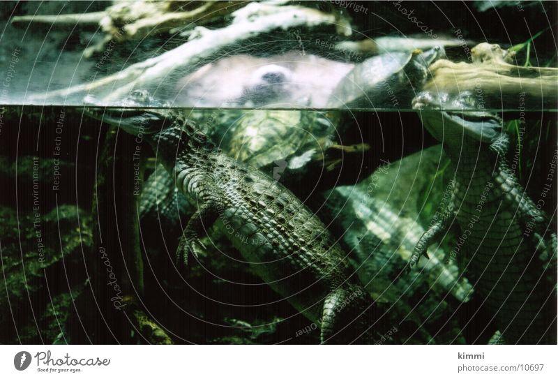 Barca_Aquarium Europa Reptil Aquarium Schildkröte Echsen Krokodil
