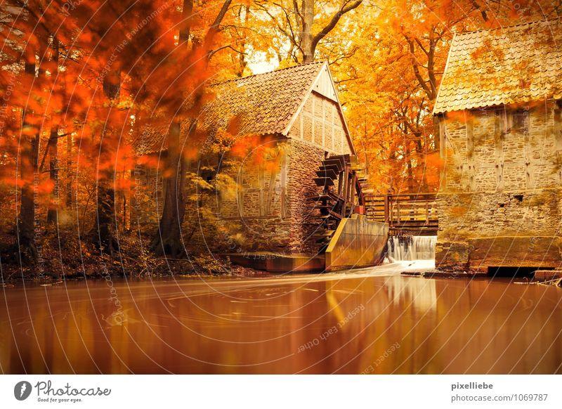 Mühle Herbst Natur Wasser Baum Erholung ruhig natürlich See braun orange Schönes Wetter Fluss Bauernhof Herbstlaub Teich Bach