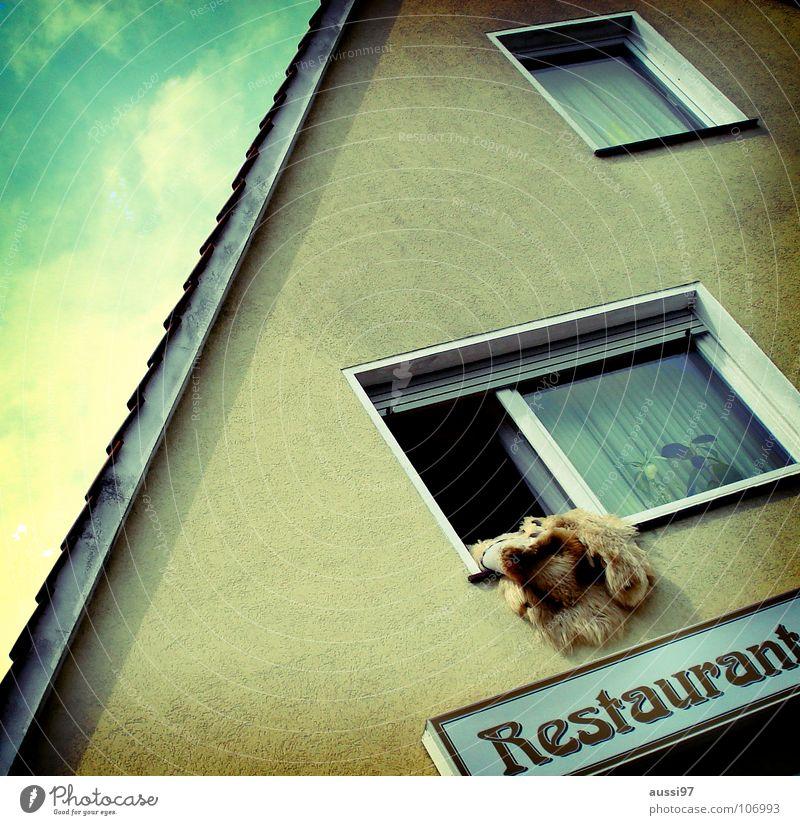 Grizzly süß-sauer Restaurant Mahlzeit Bärenfell Werbung Gasthof Gastronomie Fleisch Ernährung Wirtshaus Außenwerbung Leuchtanzeige Gammelfleisch
