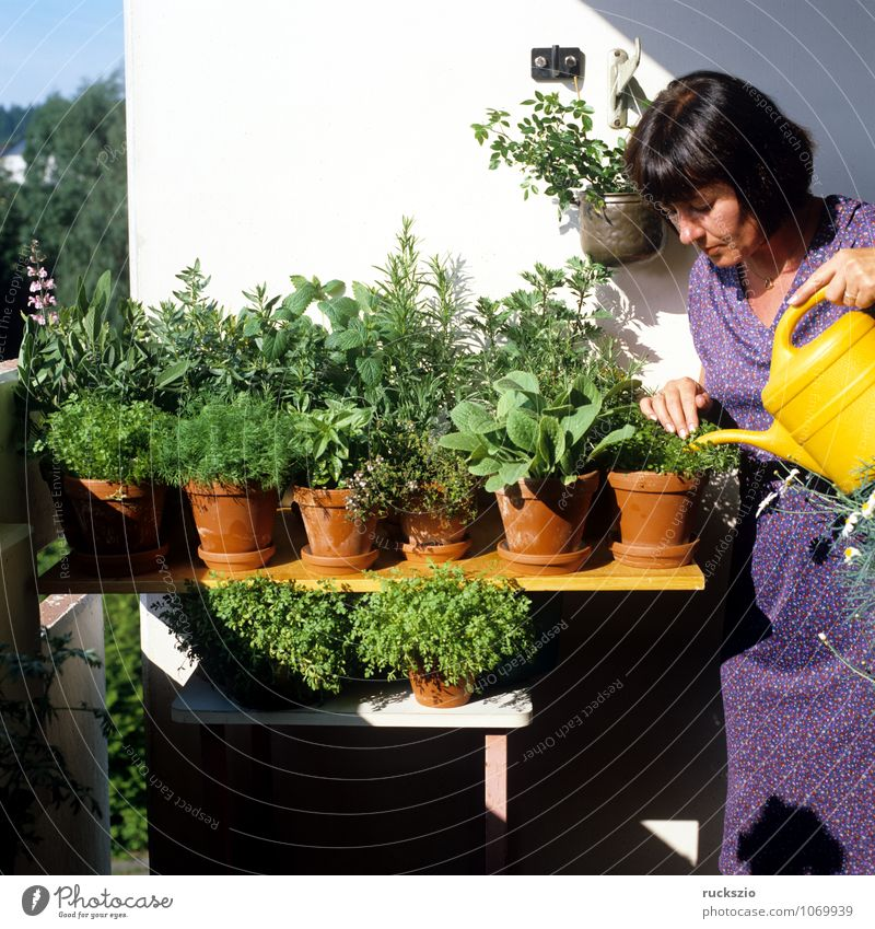 Kuechenkraeuter, Balkon, Person Kräuter & Gewürze Gesundheit Alternativmedizin Gesunde Ernährung Medikament Natur Pflanze Grünpflanze Topfpflanze Terrasse grün