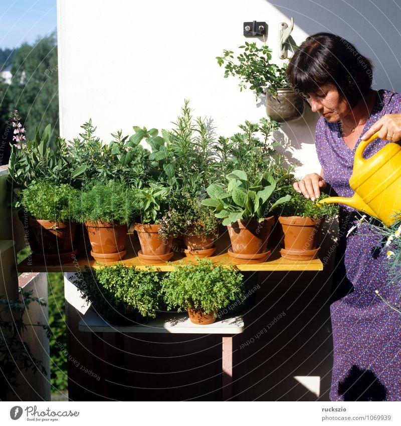 Kuechenkraeuter, Balkon, Person Natur Pflanze grün Gesunde Ernährung Gesundheit Kräuter & Gewürze Medikament Terrasse Alternativmedizin Grünpflanze Lavendel