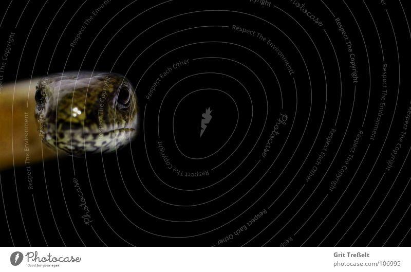 Blindschleiche schwarz Stein braun Bodenbelag Reptil Echsen